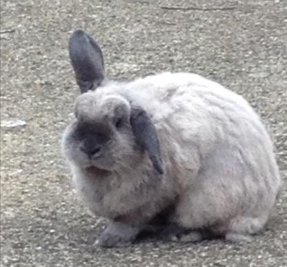 Owner discovered their pet rabbit had been killed and had a broken neck.