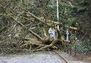 Storm Ciara brings down trees and closes roads in Hertfordshire